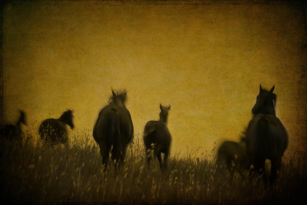 Angelina's Horses