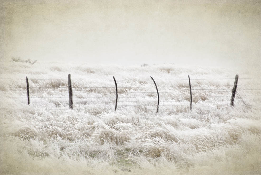 Trap Fence