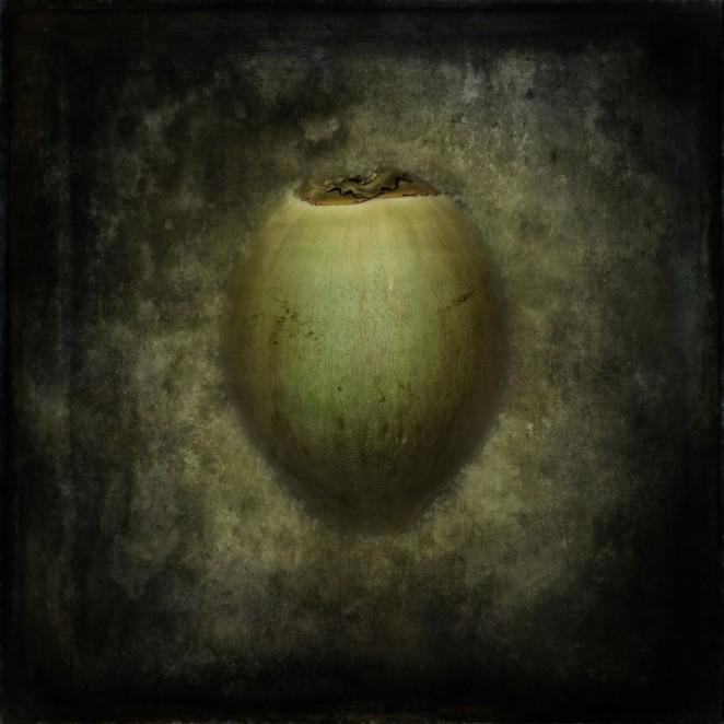 Magic Coconut
