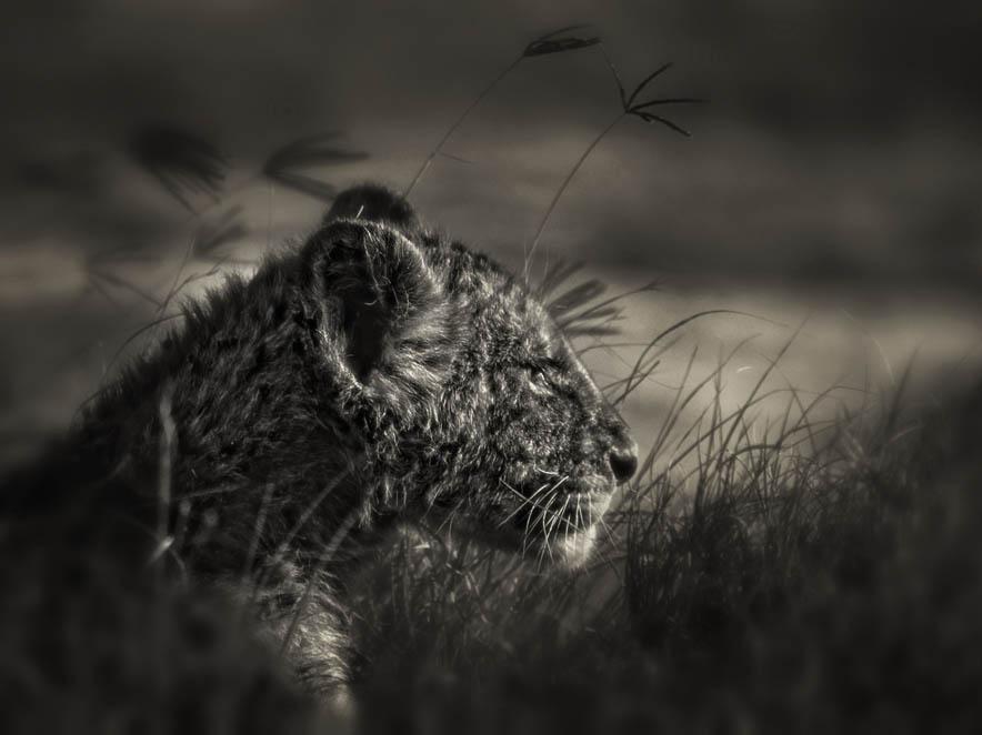 Young Simba Profile